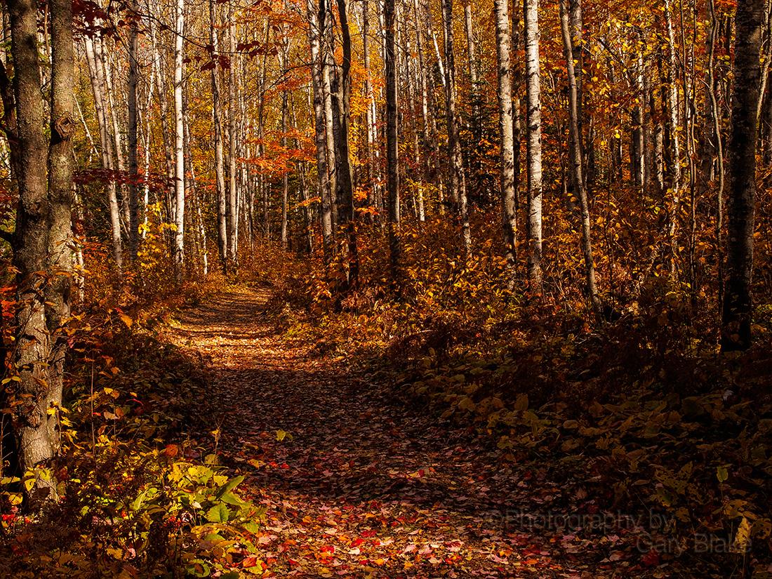 Path to Aubrey Falls