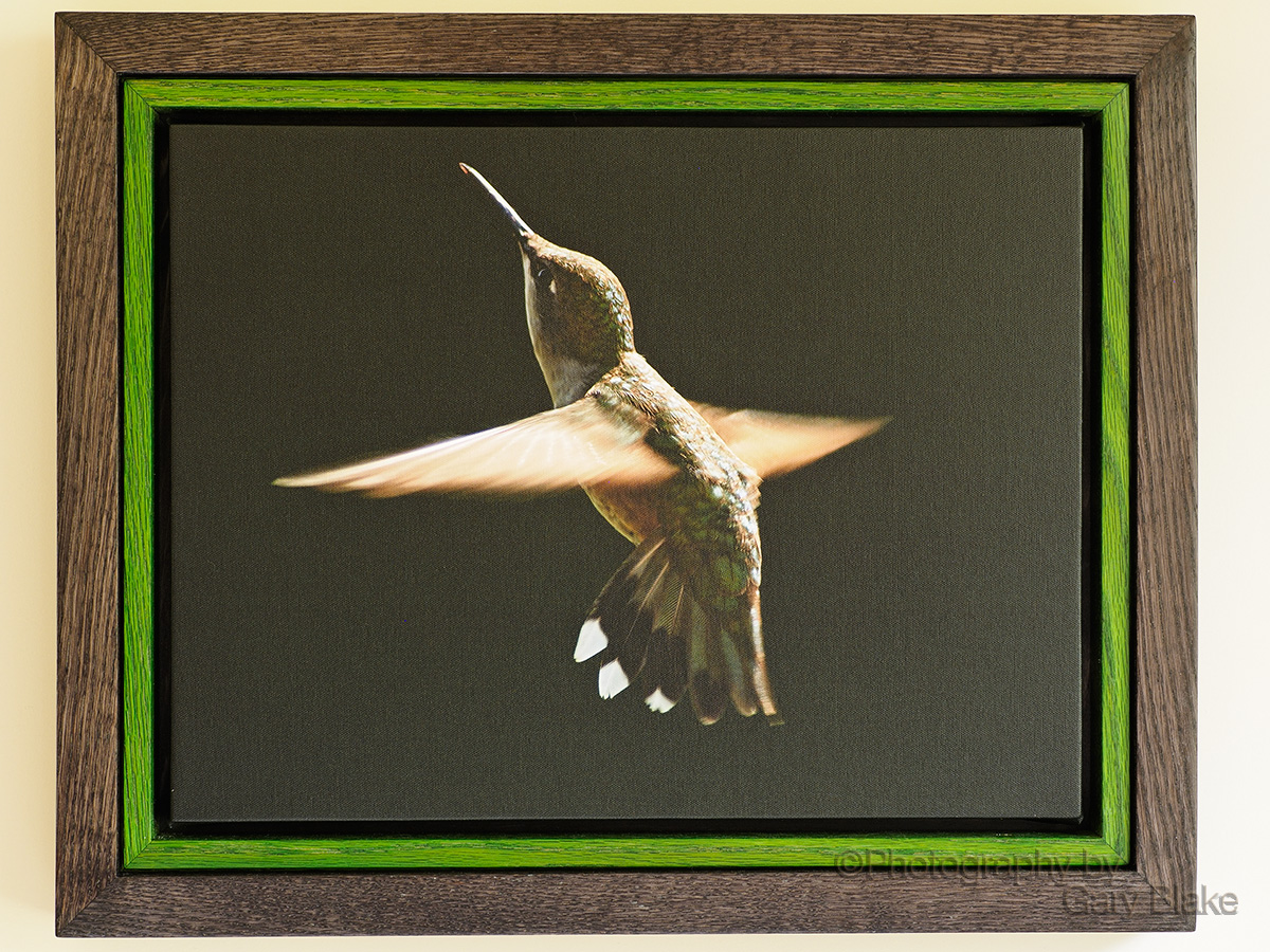 Hummingbird, Early Morning Light, on canvas, custom oak frame